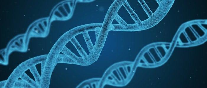 DNA zur Darstellung der biochemischen Hintergründe von Citrullin